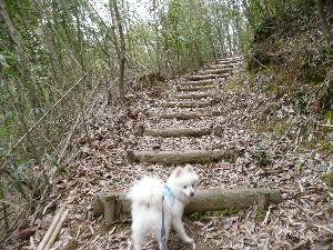階段もあるよ