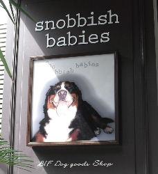 snobbish babies