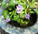 20081020_garden_hotei.jpg