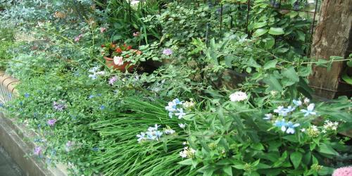 garden+011+竇。_convert_20081014100227