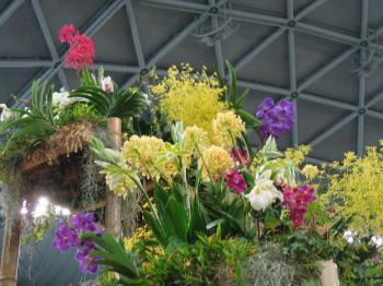 garden+繝輔Λ繝ッ繝シ繝峨・繝?+018_convert_20090315224845