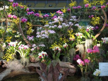 garden+繝輔Λ繝ッ繝シ繝峨・繝?+046_convert_20090315225813