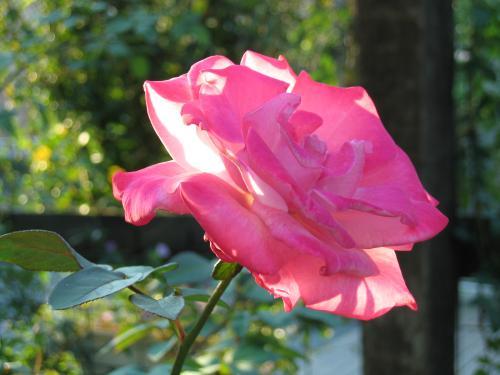 garden+001_convert_20081019131907.jpg