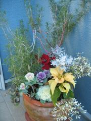 garden+001_convert_20090117120058.jpg