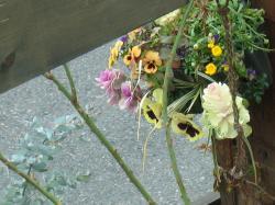 garden+001_convert_20090309205612.jpg