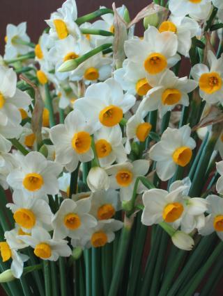 garden+002_convert_20090202180530.jpg