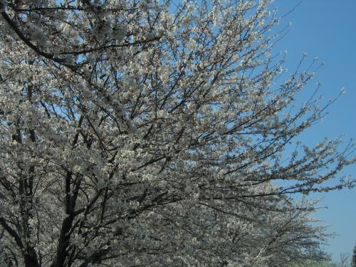 garden+002_convert_20090407015714.jpg