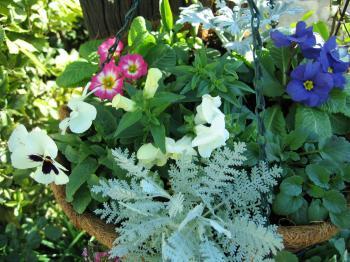 garden+003_convert_20081204170512.jpg