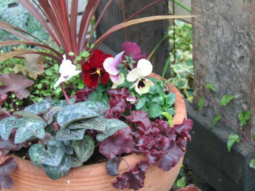 garden+003_convert_20081225150052.jpg