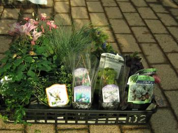 garden+003_convert_20090314180533.jpg