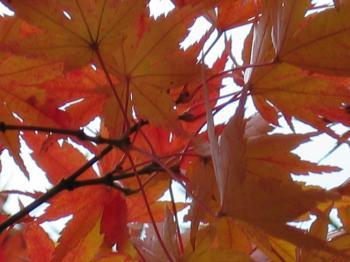 garden+004_convert_20081128170326.jpg
