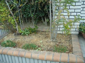 garden+004_convert_20081202182953.jpg