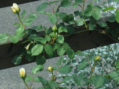 garden+004_convert_20090505111833.jpg