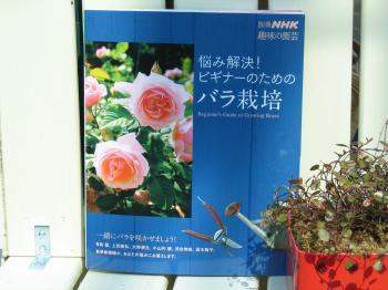 garden+005_convert_20090221143147.jpg