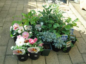 garden+006_convert_20081202182051.jpg