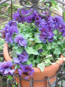 garden+006_convert_20090309203059.jpg