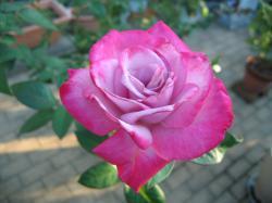 garden+007_convert_20081019125742.jpg