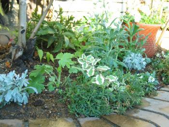 garden+008_convert_20081202180019.jpg