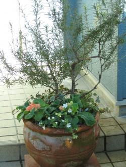 garden+008_convert_20090117115822.jpg