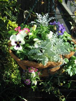 garden+009_convert_20081204170021.jpg