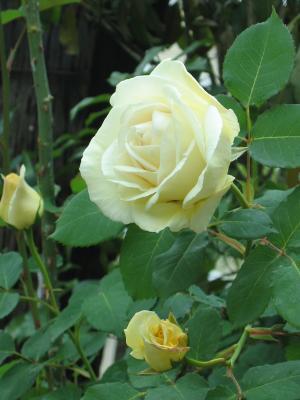 garden+009_convert_20090505114239.jpg