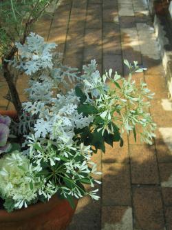 garden+010_convert_20081109173735.jpg