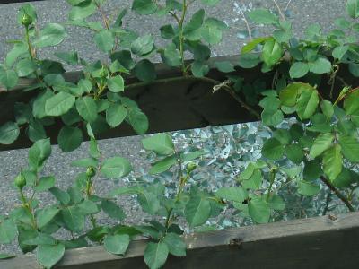 garden+010_convert_20090505111136.jpg
