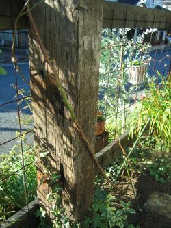 garden+011_convert_20081216212821.jpg