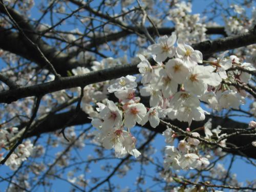garden+011_convert_20090407020127.jpg