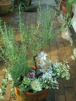 garden+012_convert_20081109173436.jpg