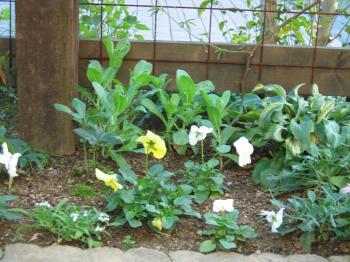 garden+012_convert_20081113131940.jpg
