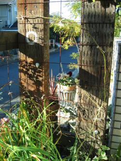 garden+012_convert_20081216213216.jpg