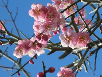 garden+012_convert_20090208205732.jpg