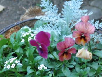 garden+013_convert_20081128171217.jpg