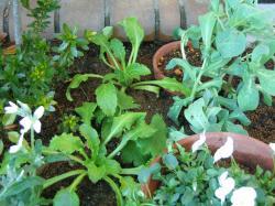 garden+013_convert_20081202180954.jpg