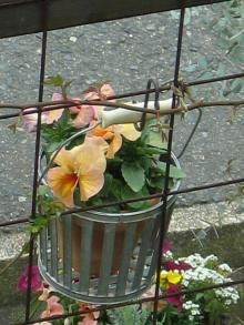 garden+013_convert_20090309210541.jpg