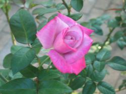 garden+014_convert_20081019124852.jpg