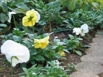 garden+014_convert_20081113131639.jpg