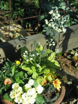 garden+014_convert_20090208204522.jpg
