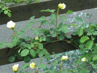 garden+015_convert_20090505112536.jpg