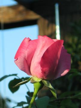 garden+016_convert_20081019113033.jpg