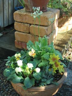 garden+017_convert_20090117124159.jpg