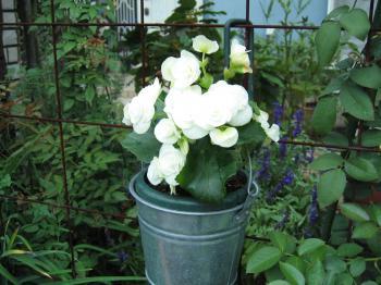 garden+018_convert_20081031193243.jpg