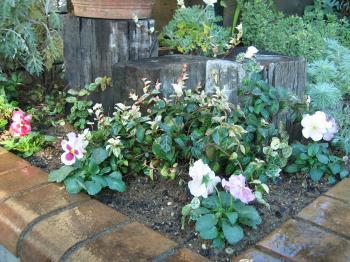 garden+018_convert_20081202183223.jpg
