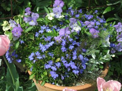 ブルーの寄せ植え