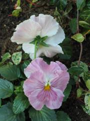 garden+020_convert_20081202184811.jpg