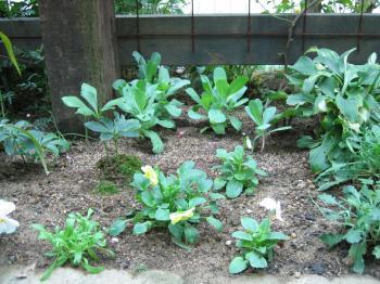 球根と苗の植え付け