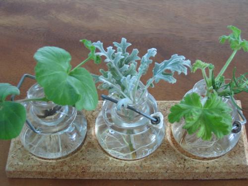 garden+023_convert_20090206113912.jpg