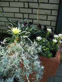 garden+023_convert_20090622214011.jpg