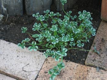 garden+024_convert_20090319100751.jpg